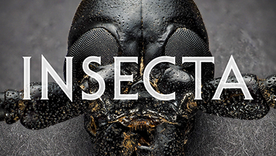 insecta poster image